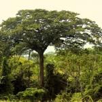 Bosque en Monte Claro