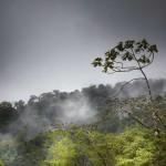 Bosque in Monte Claro
