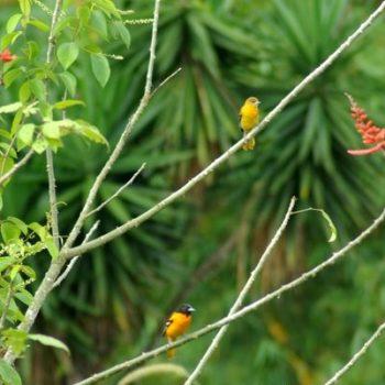 Bird in Monte Claro