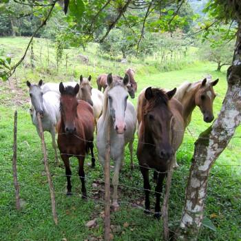 Baby horses in Monte Claro