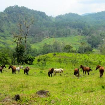 Horses in Monte Claro
