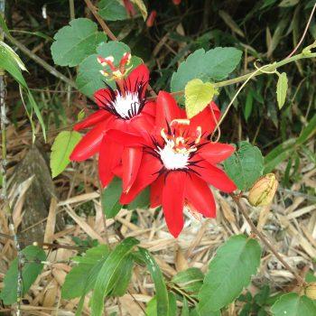 Wild flower - Monte Claro
