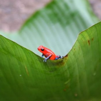 Biodiversity in Monte Claro