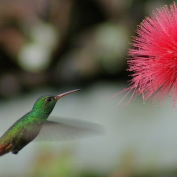 Trail Colibri (Hummingbird Trail) - Hacienda Monte Claro