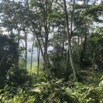 Trail Morpho - Hacienda Monte Claro