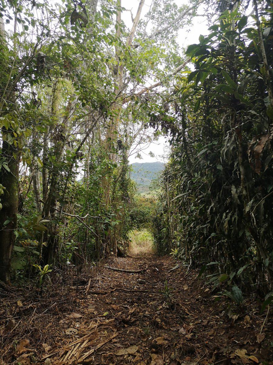Trail Pizote - Hacienda Monte Claro